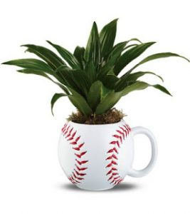 ball-with-plant