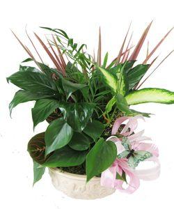 plants-13